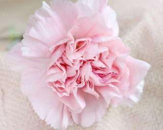 6-flower-1364071_1920
