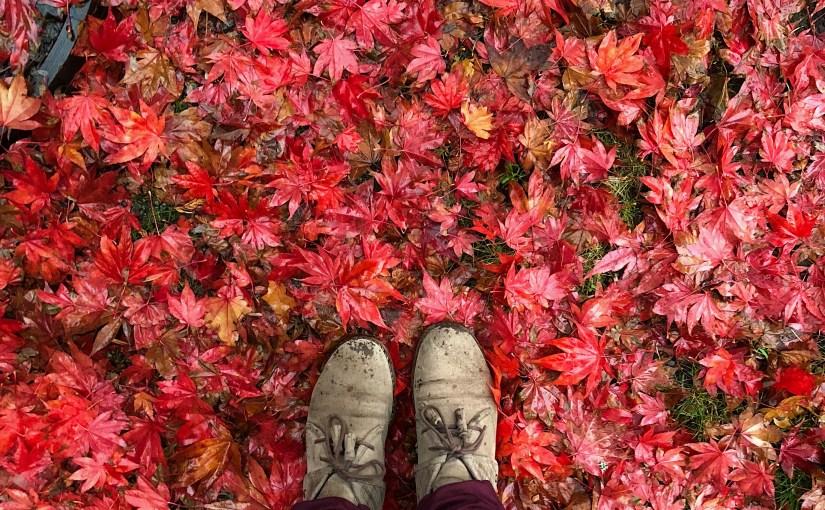 Thankful Thursday Special Edition: Autumn 2018