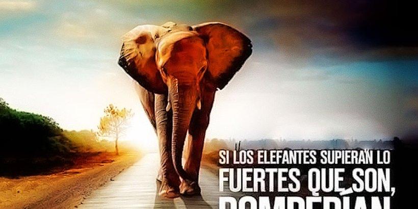 """""""Si los elefantes supieran lo fuertes que son, romperían cadenas y saldrían del circo."""""""