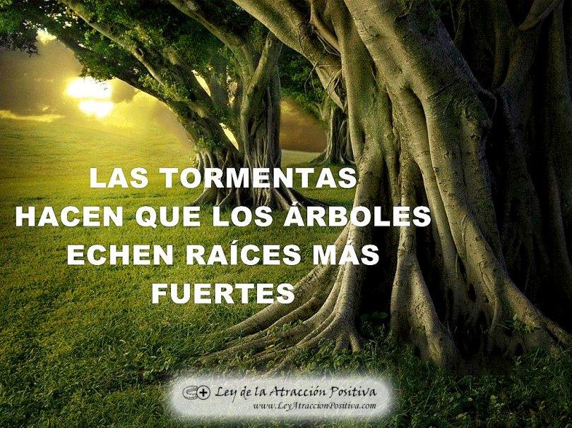 """""""Las tormentas hacen que los árboles echen raíces más fuertes."""""""
