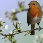 Poema – Un Pájaro Canta