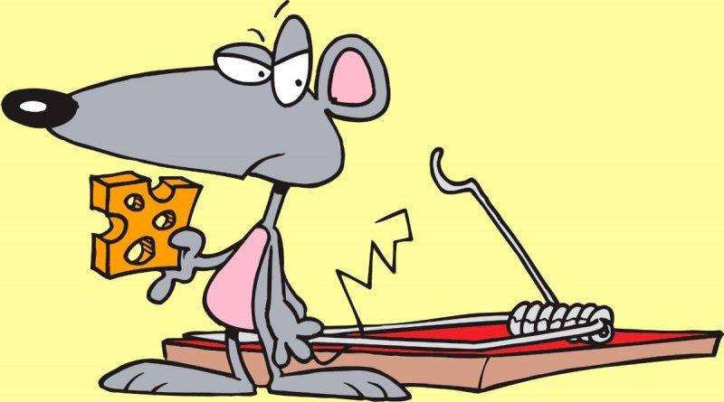 El pequeño ratón indisciplinado- Fàbula de animales