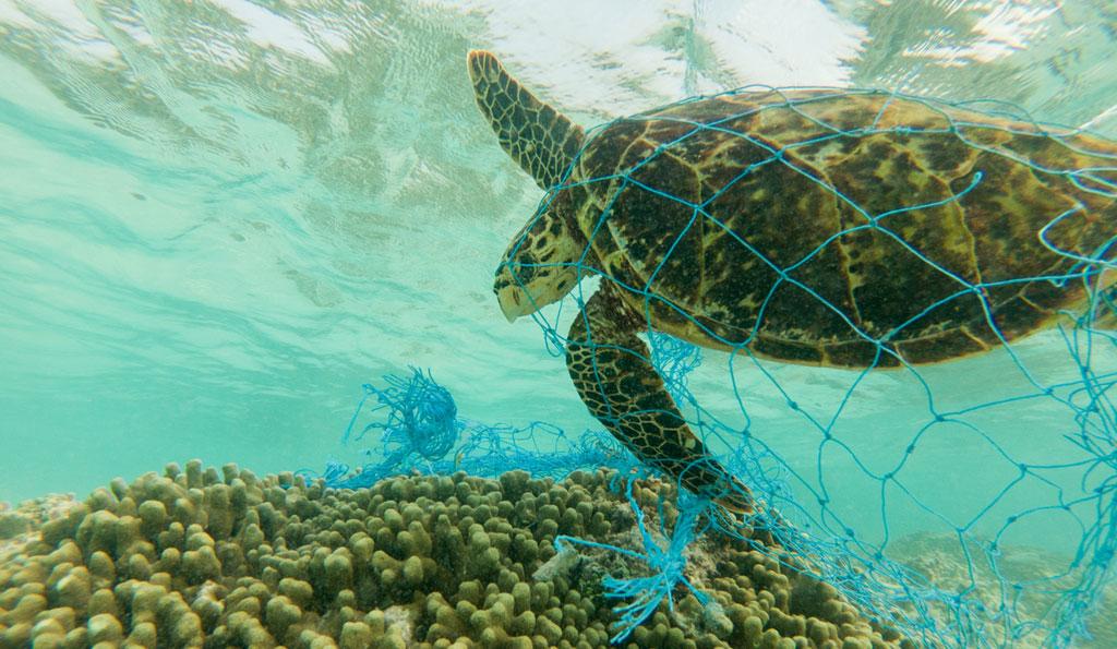 Plastic not-so-fantastic