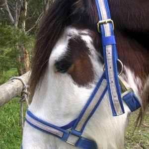 halter-side-view-on-the-horse-hl008_1.jpg