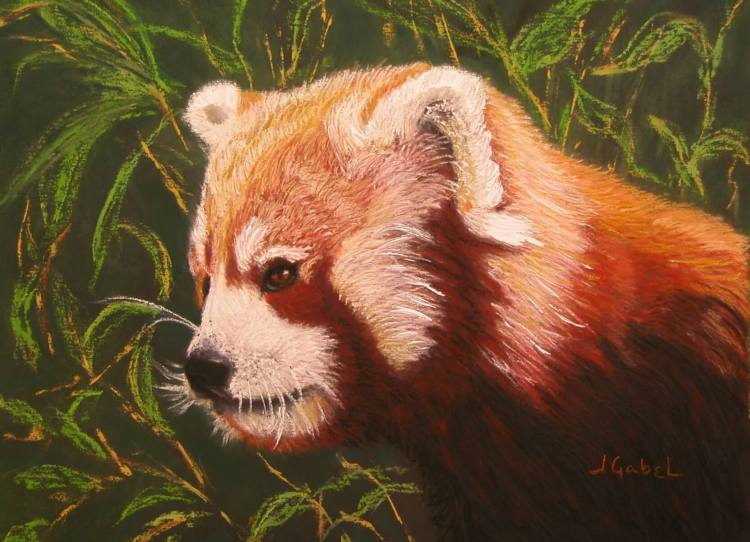 """What's Your Passion? © Laura Gabel, """"Red Panda 2"""". Pastel, 16 x 13. Private Collection."""