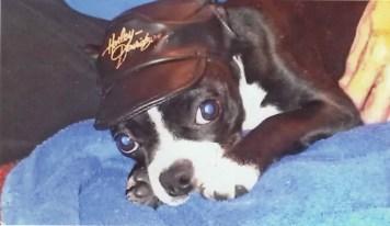 emma the dog photo