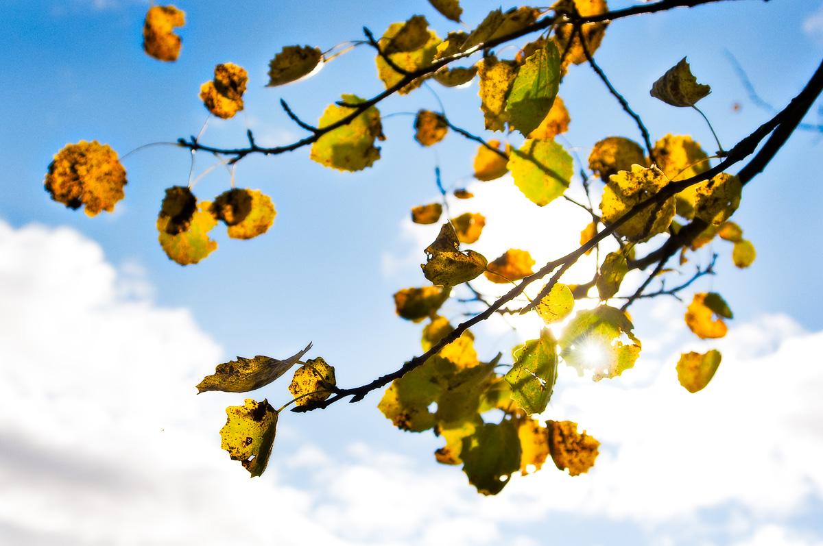 Löv och grenar. Fotograf Lars-Göran Norlin