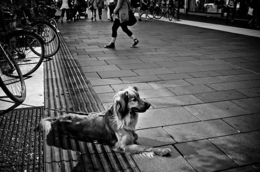 Hund på Kungsgatan, Umeå