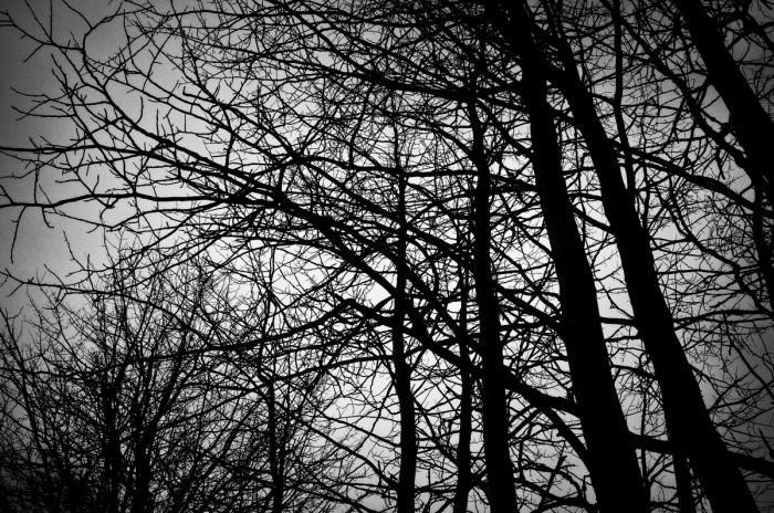 Träd. Fotograf Lars-Göran Norlin