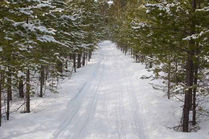Skoterspår i vinterlandskap