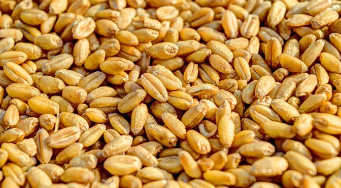 Eigenliebe isoliert – Die Geschichte vom Weizenkorn