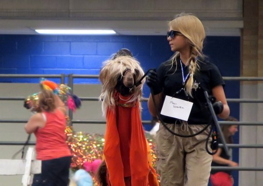 Things About Stuff » 2018 Indiana State Fair llamas incognito