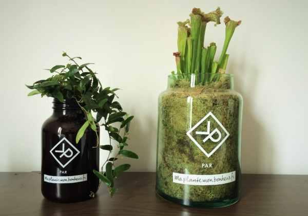 """2 plantes de la gamme """"Vitamin Plant"""" pour homme"""