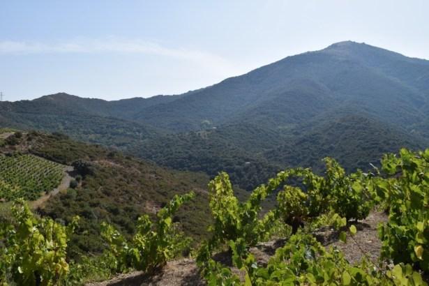 Du bio, du beau sur les terres du Roussillon - vins bio en roussillon