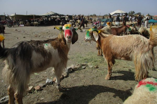 Zhob, High prices keep animal trade slow, fail to attract the intending buyers