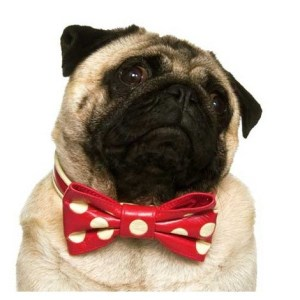 pug clothes UK 2