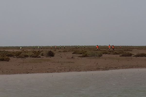 Sindh Forest Department brings pride to nation by planting Maximum Number of Mangroves for 3rd Guinness World Record