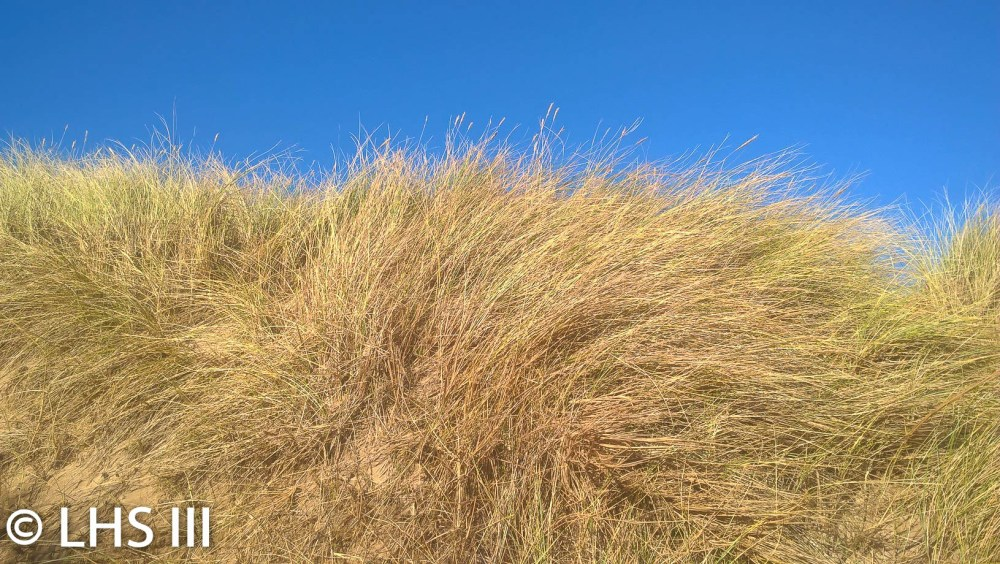The Dunes Of Lytham