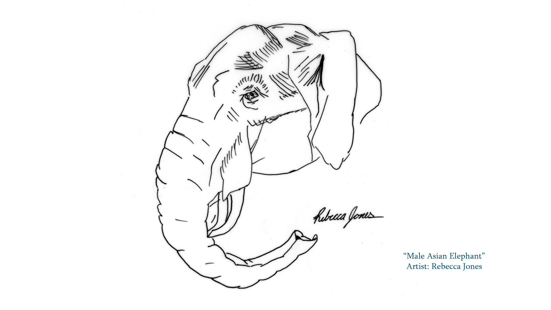 Veterinary Medicine Library News See Student Artwork From The Veterinary Illustration