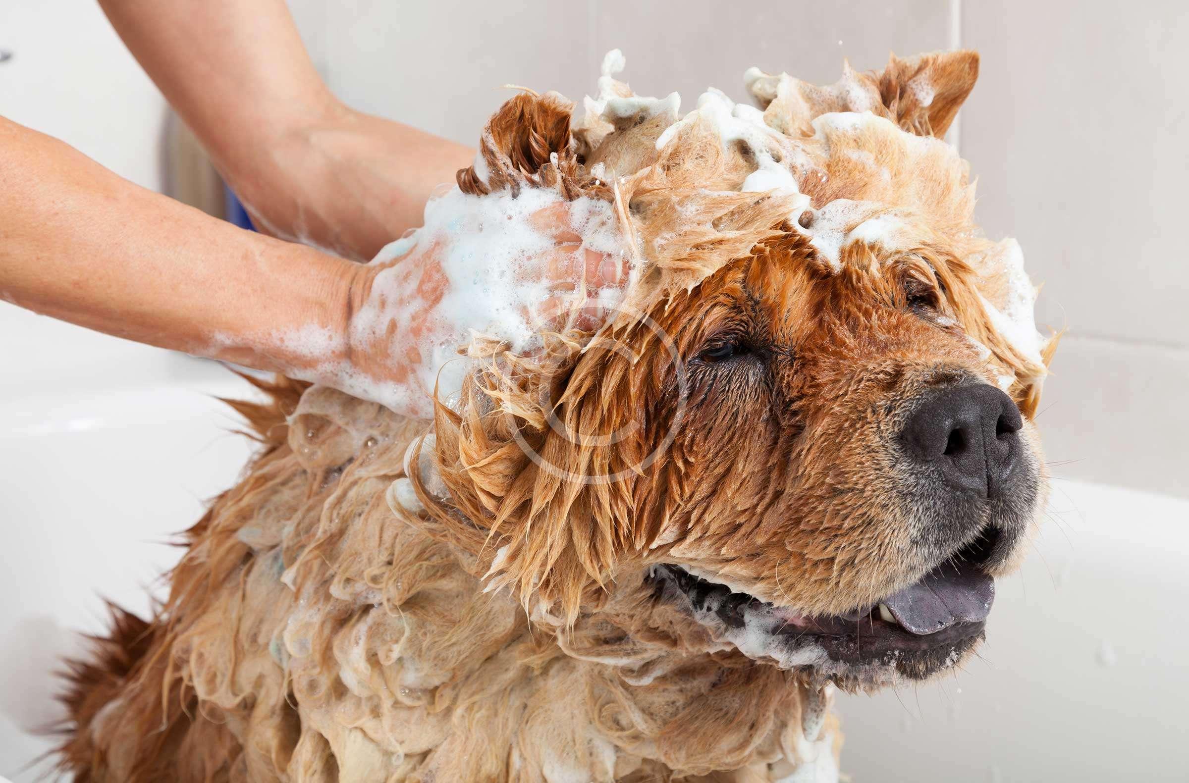 Bath & Dry