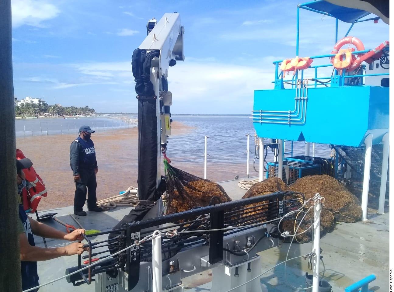 Recolecta Semar 803 toneladas de sargazo en Quintana Roo