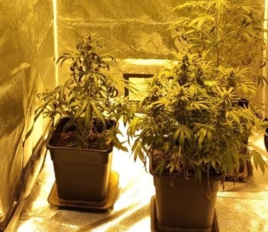 marijuana-san-vittore-olona-1