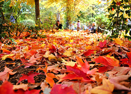 Get Your Fall Cleanup Now and Reap The Benefits In Spring