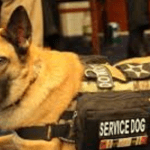 Combat Veteran Forced To Leave Gun Show With Service Dog