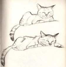 chat-endormi-croquis