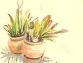 plante-croquis-libou