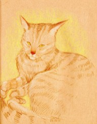 chat-dessin-yeux-jaune