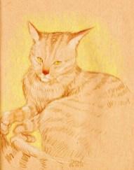 chat-dessin-yeux-jaune