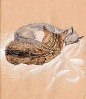 deux-chats-calin-sieste