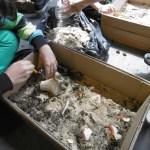 Découverte de céramiques et d'ossements