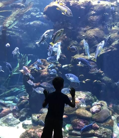 Child looking at aquarium