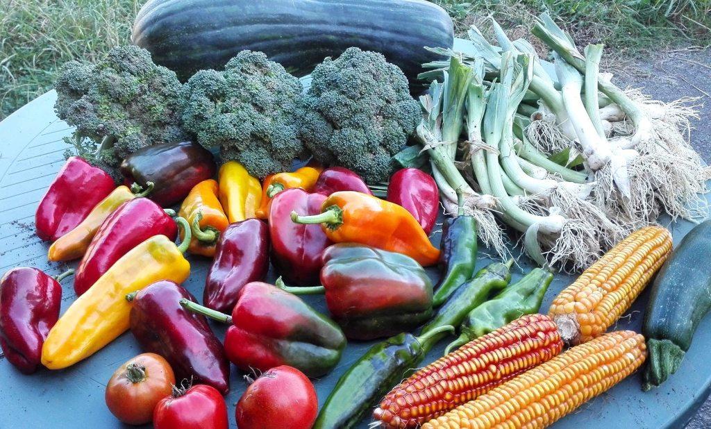 Agroecológicos