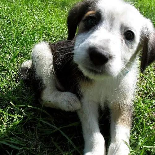 Sognare Cani Affetto E Fedeltà Significato Del Sogno