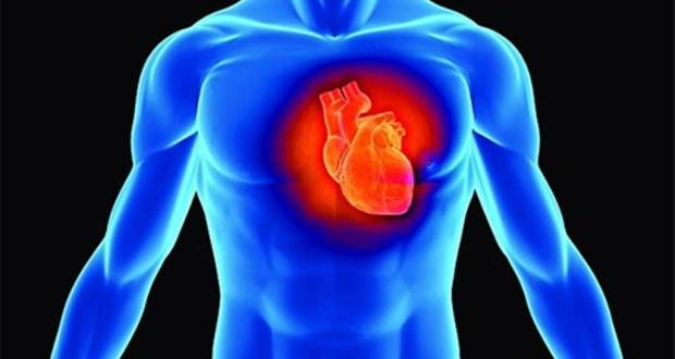 srce-organ-tijelo