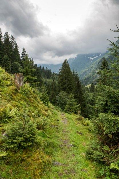 Wanderweg oberhalb des Felberbachs