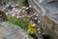 Blumenvielfalt zwischen den Felsen