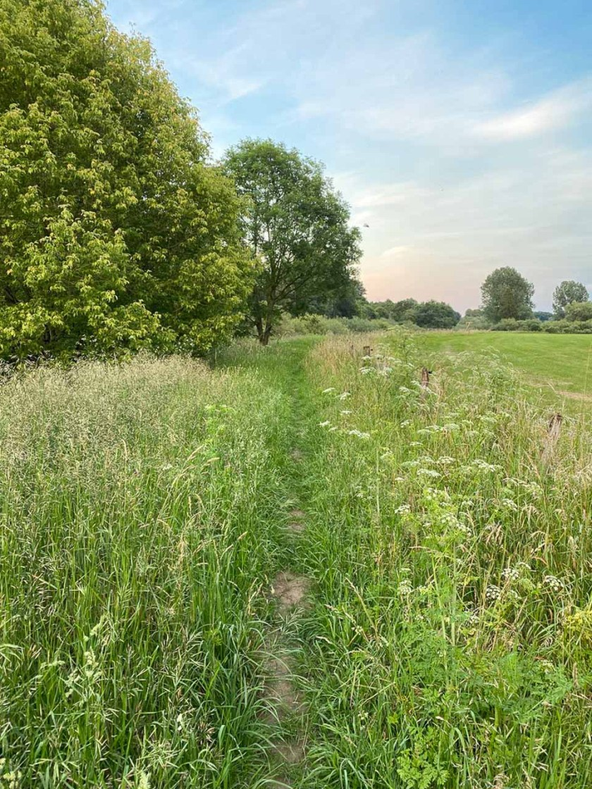 Wanderweg durch hohes Gras an der Ems entlang