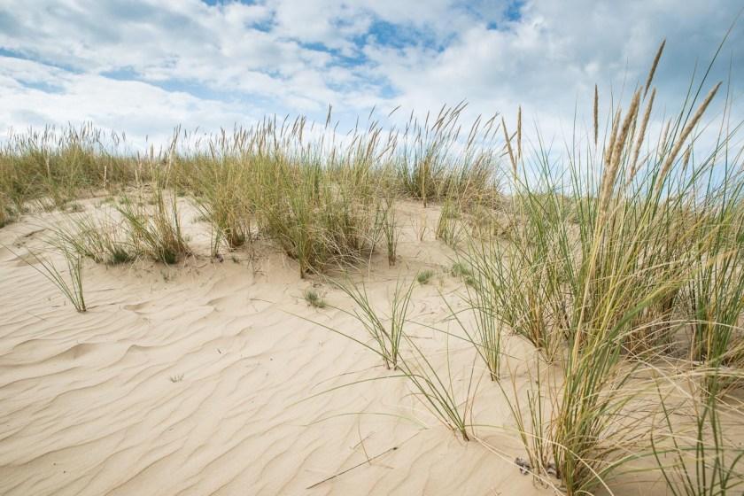 Sanddüne im Nationalpark Drents-Friese Wold in den Niederlanden