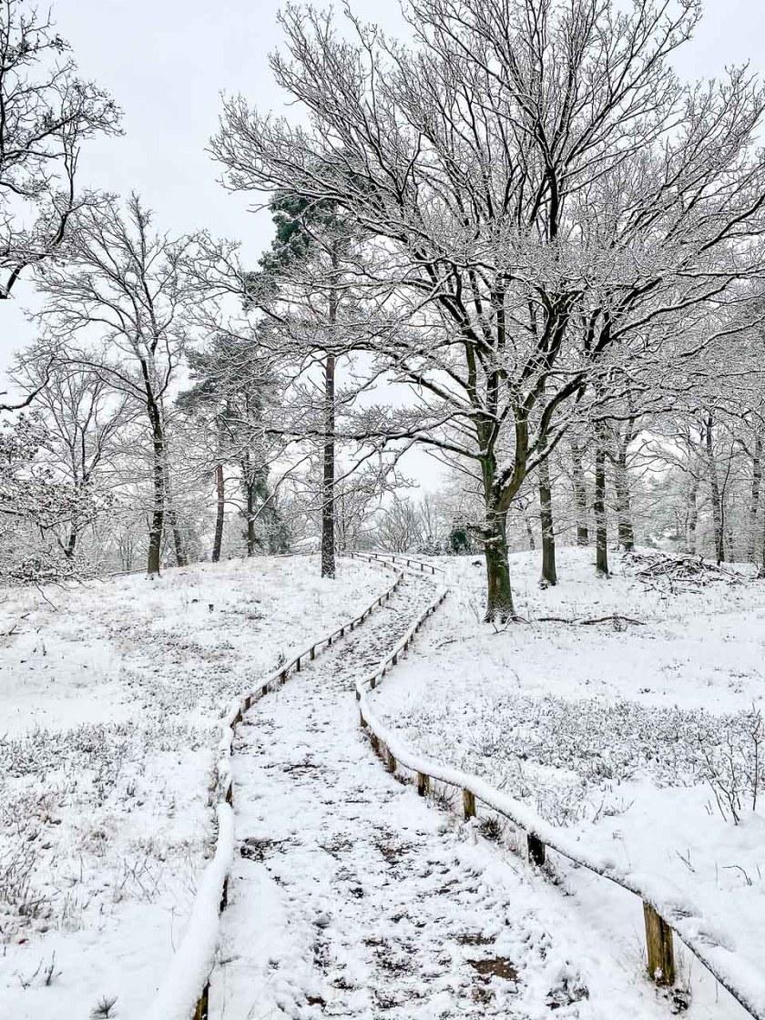Verschneite Heidelandschaft in den Bockholter Bergen