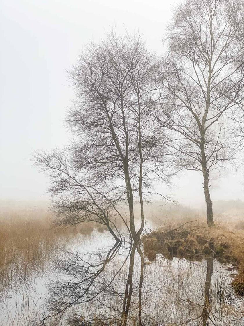 Das Schutzgebiet Het Buurserzand ist 455 Hektar groß