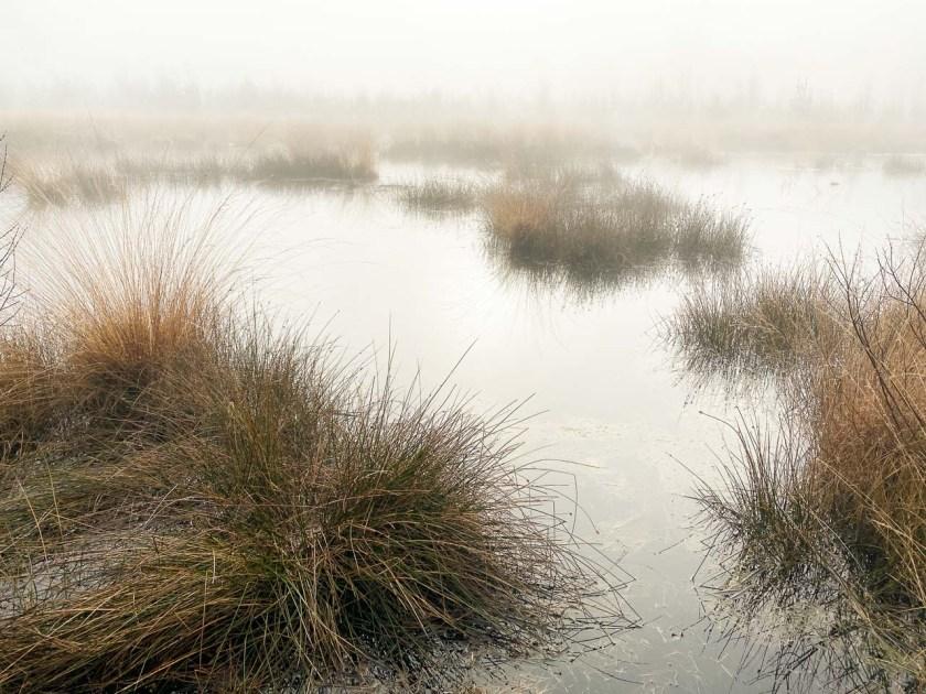 Das Het Haaksbergerveen ist 600 Hektar groß