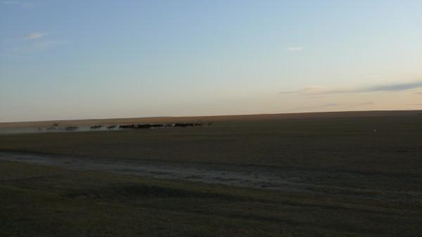 סוסים-מונגוליה-הפנימית