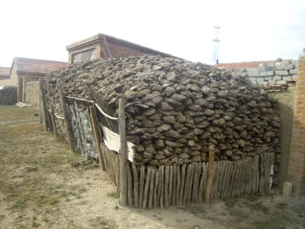 צואה של פרות - משמשת לחימום ובישול