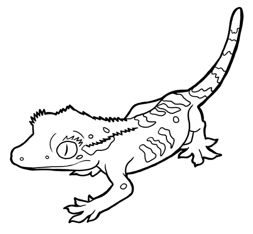 Animal Facts Coloring Sheets Long Island Children S Museum