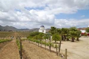 El Valle de Guadalupe rutas del vino