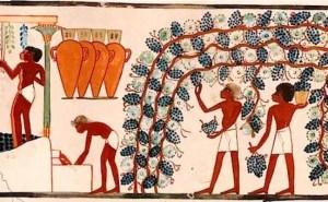 La historia del VIno en Egipto